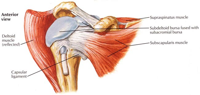 shoulder-arthroscopy